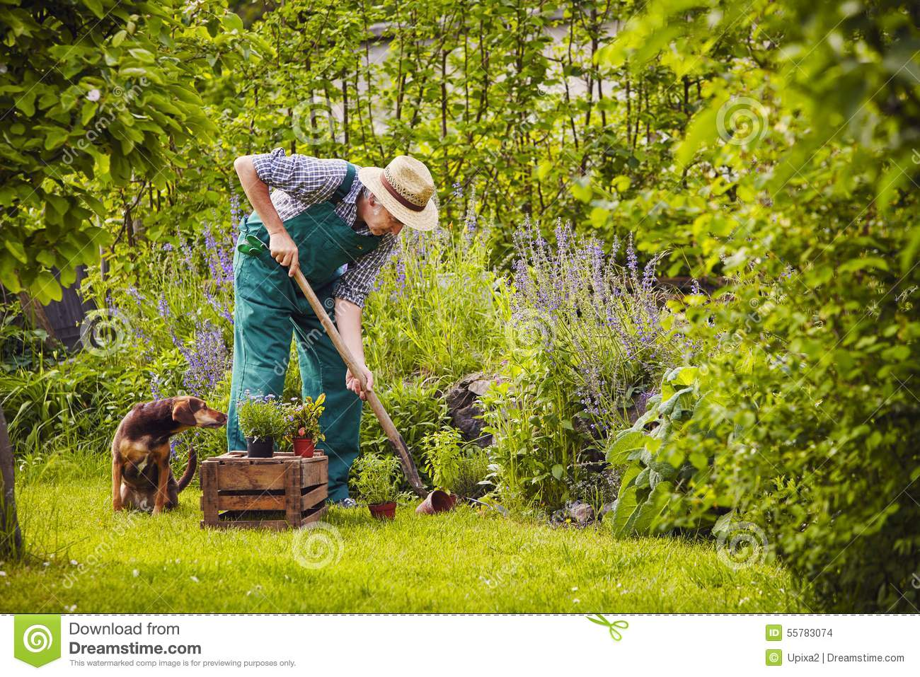Man Dog Gardening Work Stock Photo Image Of Spring