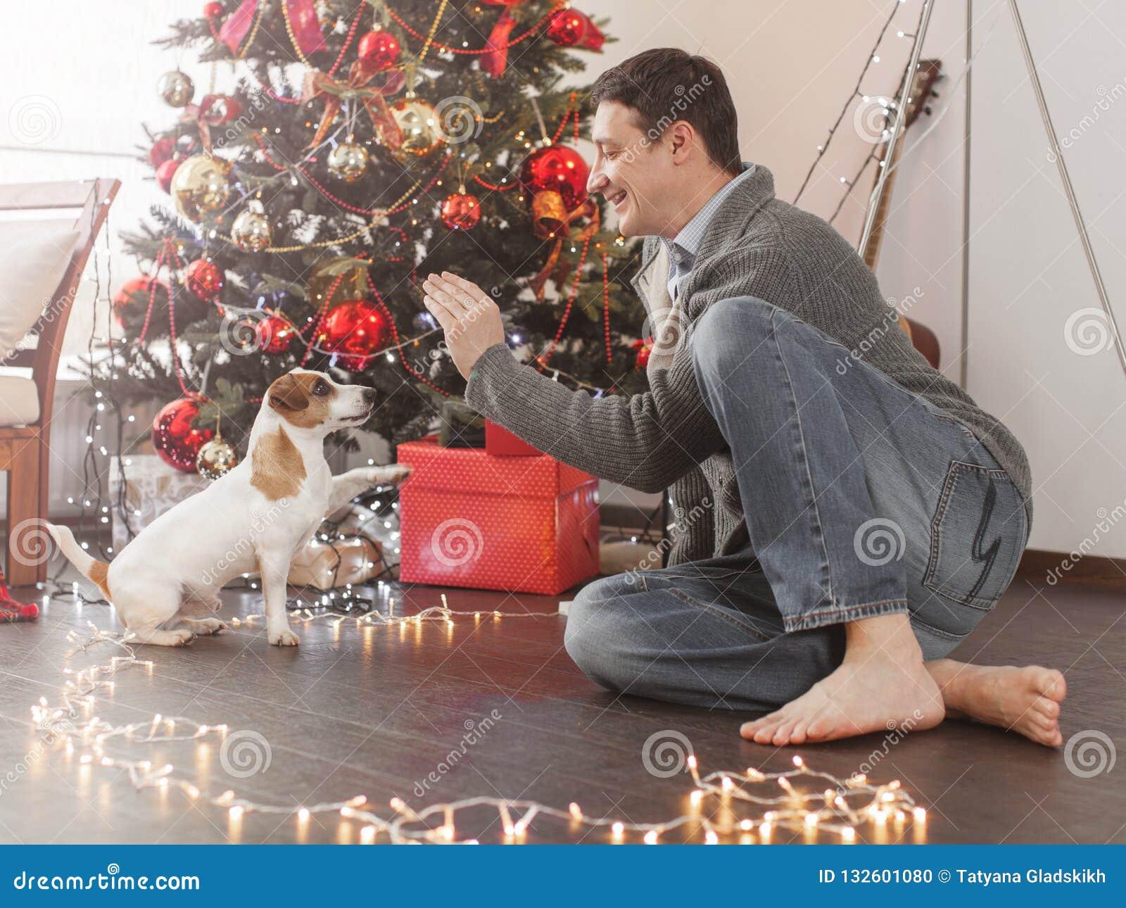 Man With Dog Near Christmas Tree Stock Photo Image Of Animal Handsome 132601080