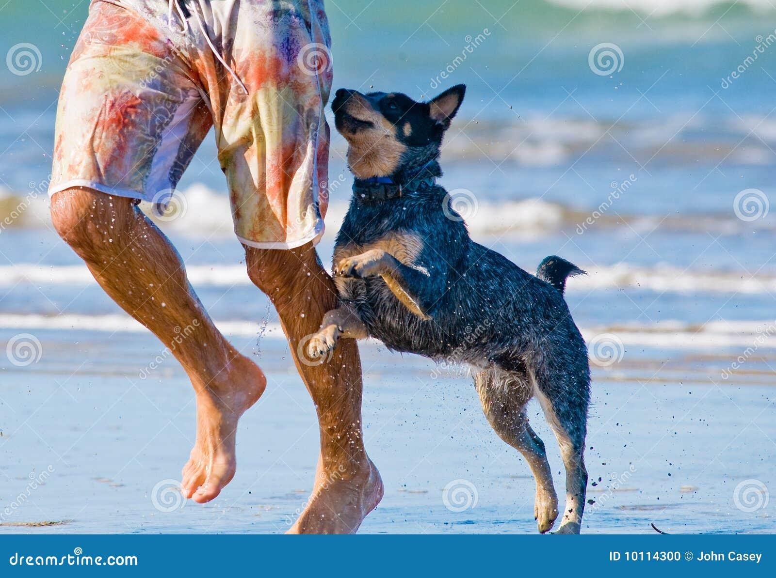 Dog Man Star - Wikipedia