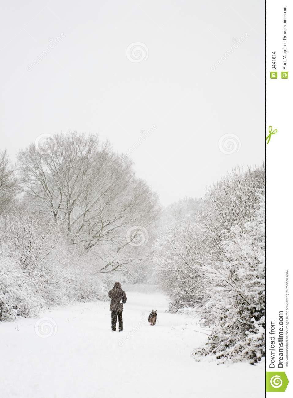 Man And Dog In Snow Stock Photo. Image Of Peaceful