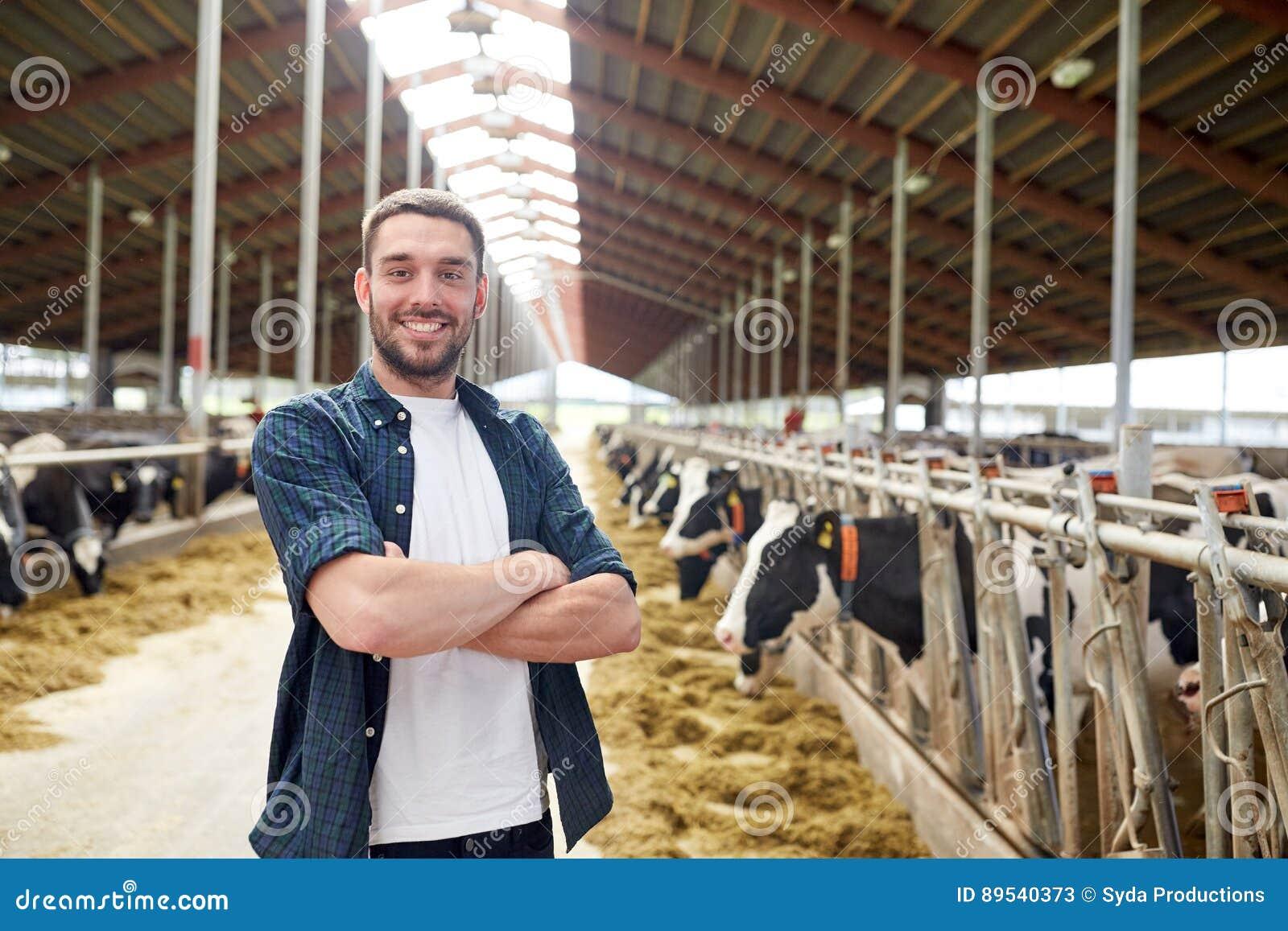 Man eller bonde med kor i ladugård på mejerilantgård