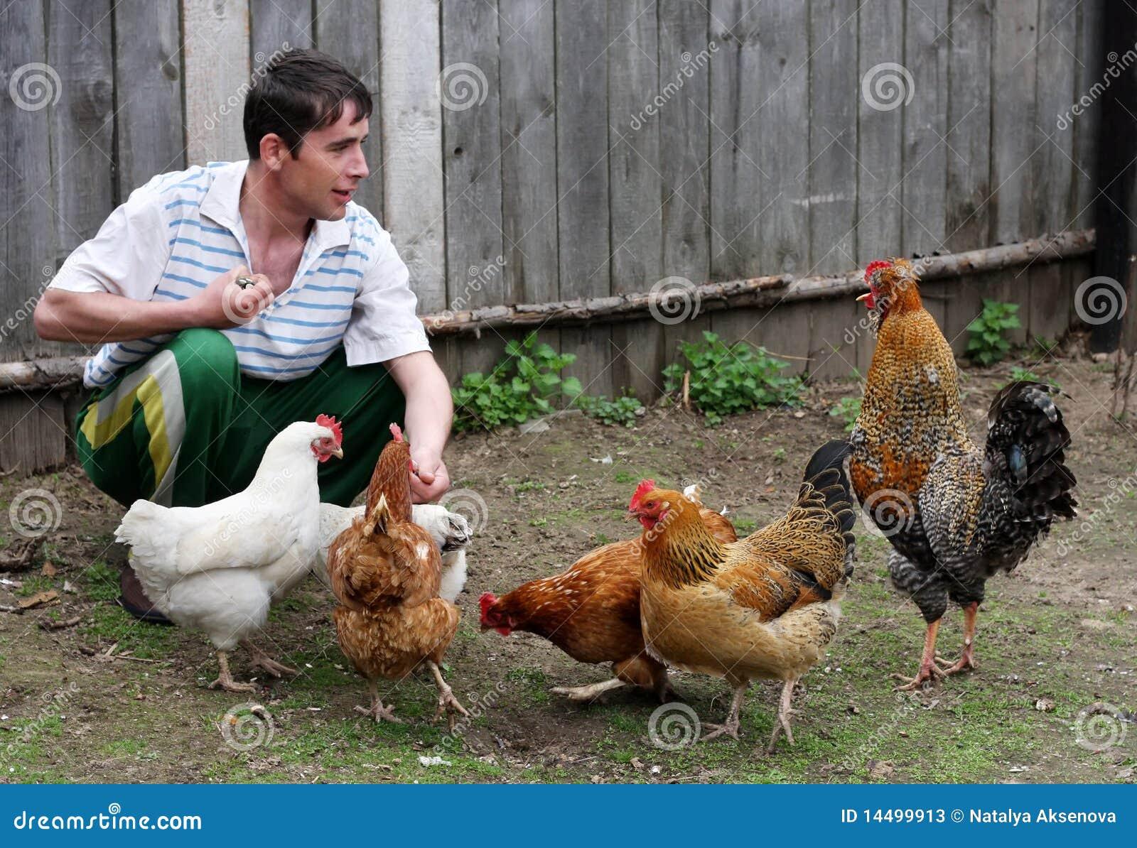 Man feeds hens
