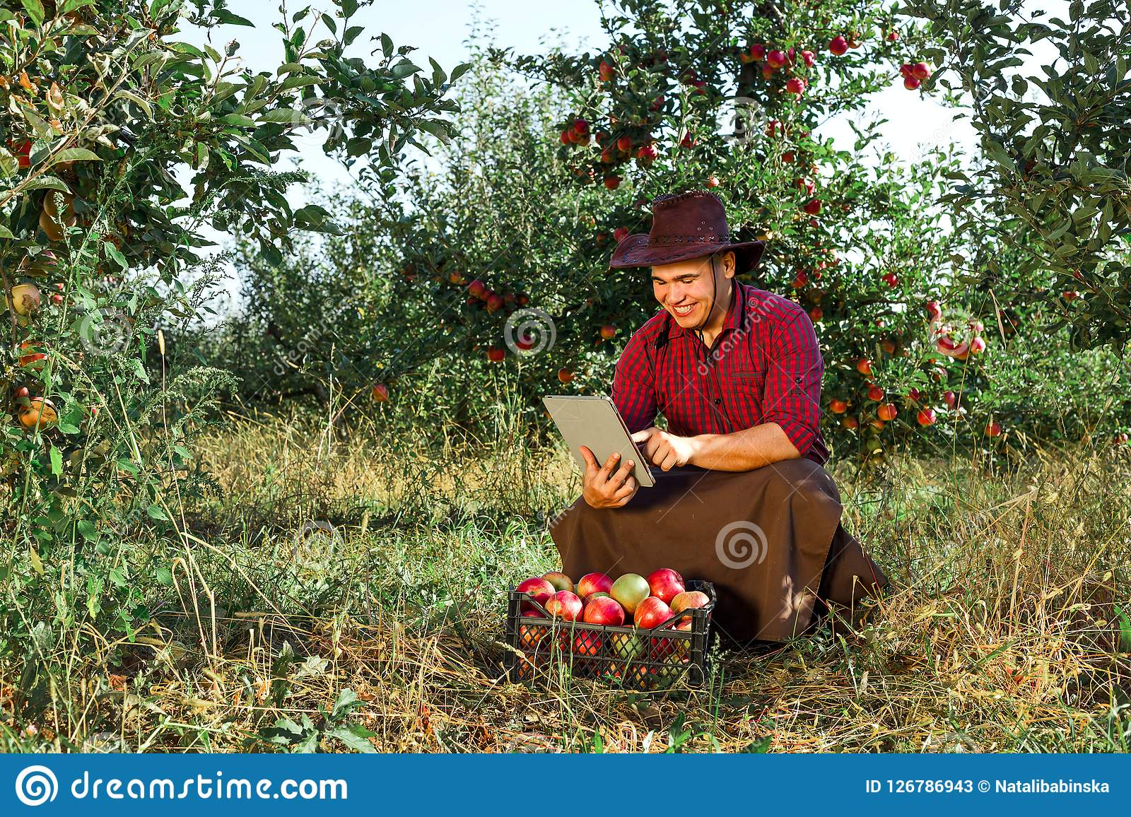 Man garden collect ripe apples hat green red proprietor worker owner harvest. Young happy man in the garden collect ripe apples. Farmer in his own garden looking Stock Photos