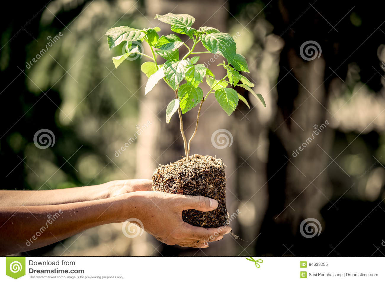 free soil single guys Find free soil ads from sydney region,  hi guys, if you have any soil, clay, sandstone,  free postage / free local pick-up king single(mm): .