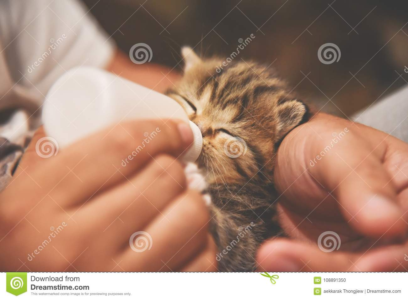 Man hands feeding milk from the bottle to small kitten.
