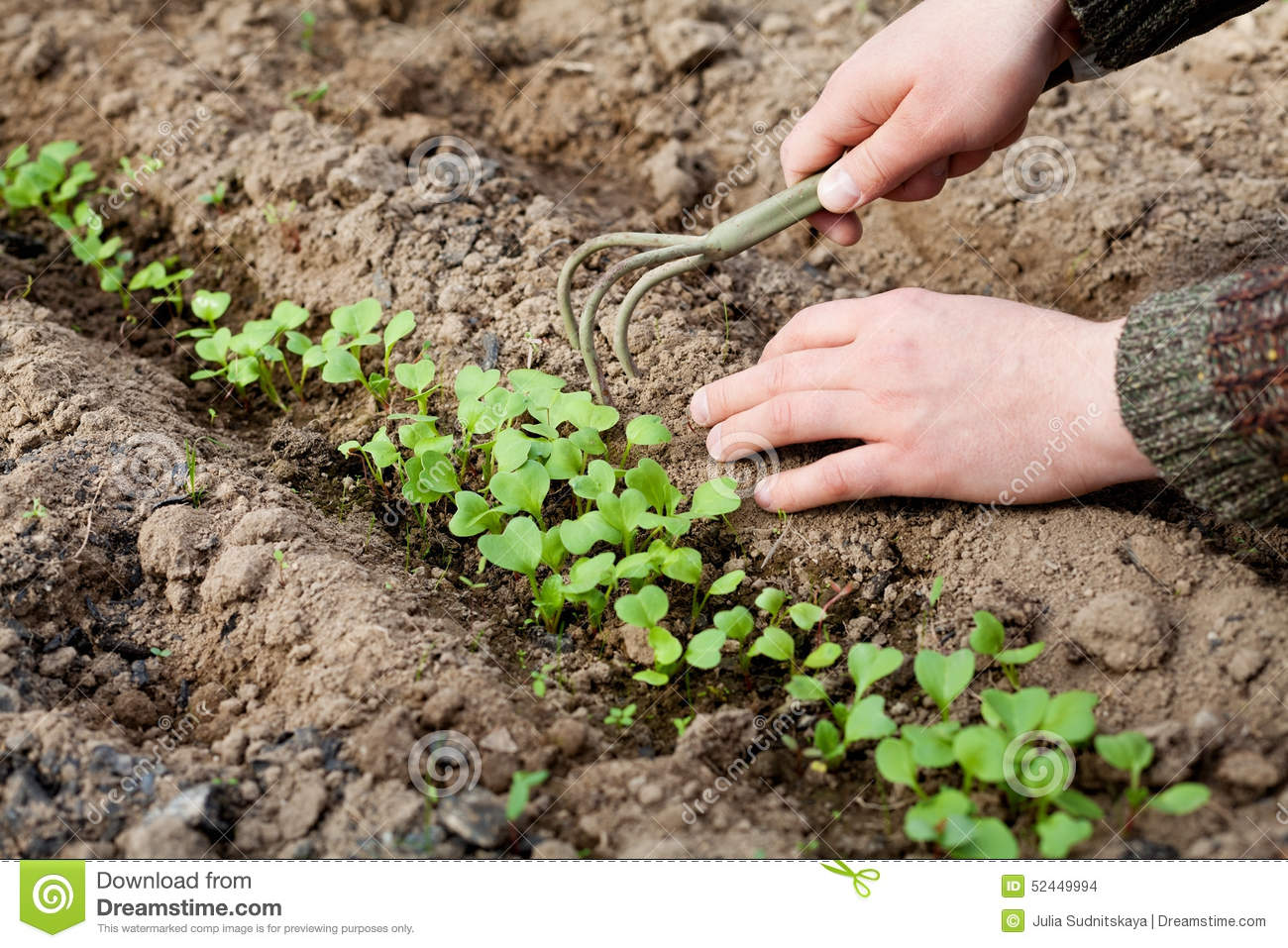 Man hands with hoe cultivated of young green sprout in the for Soil young s modulus