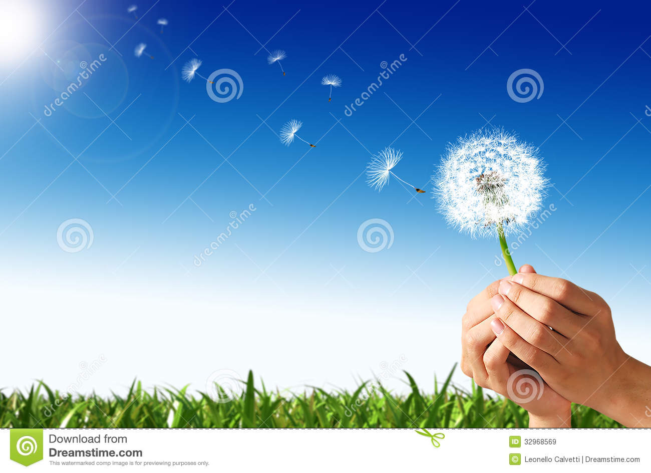 Man Hands Holding A Dandelion Flower. Royalty Free Stock Images ...