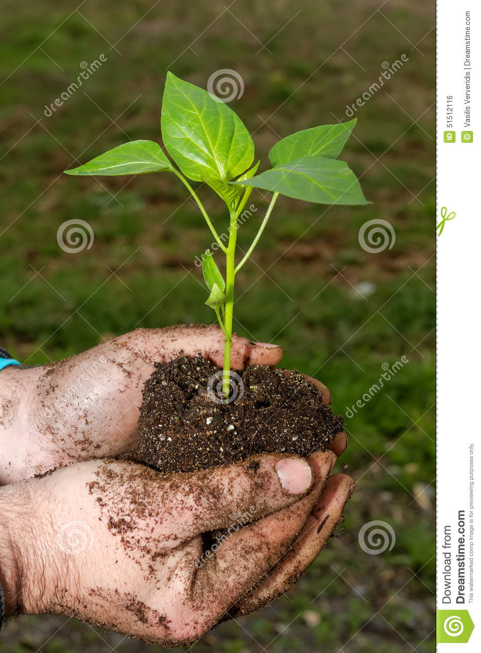 Earth And Vine, The Symbol Of Life Royalty-Free Stock ...