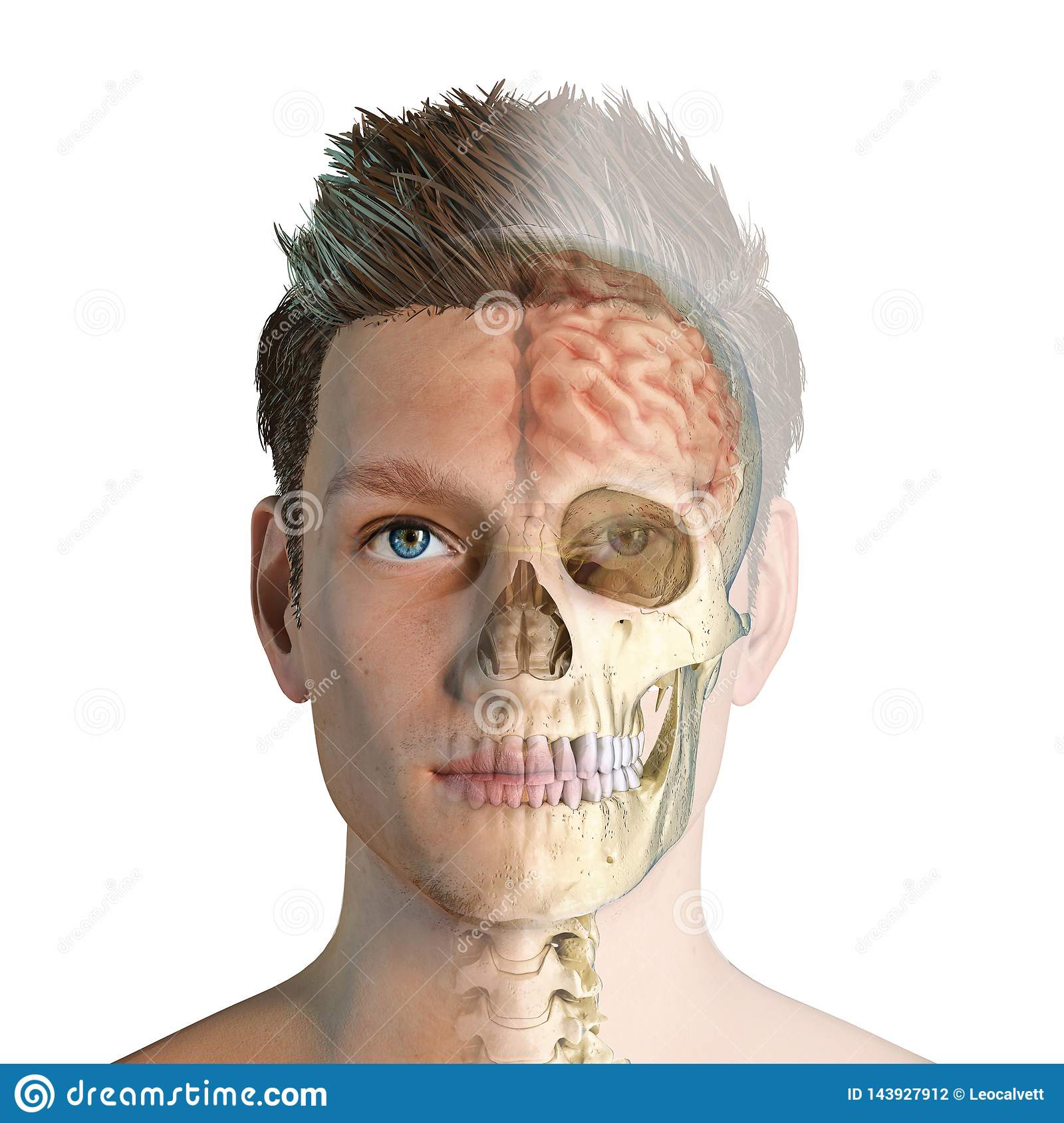 Man head with skull and brain ghosted