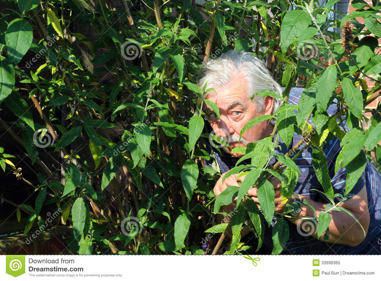 Man Hiding In The Bushes Or Voyeur. Royalty Free Stock Photo - Image ...