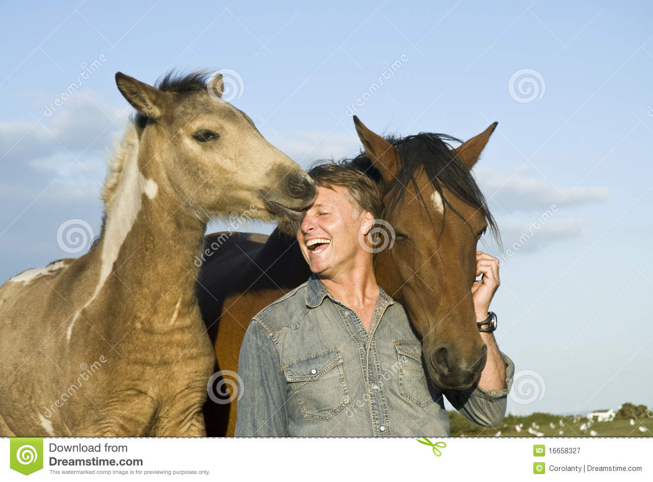 Man With His Horses Royalty Free Stock Photography Image