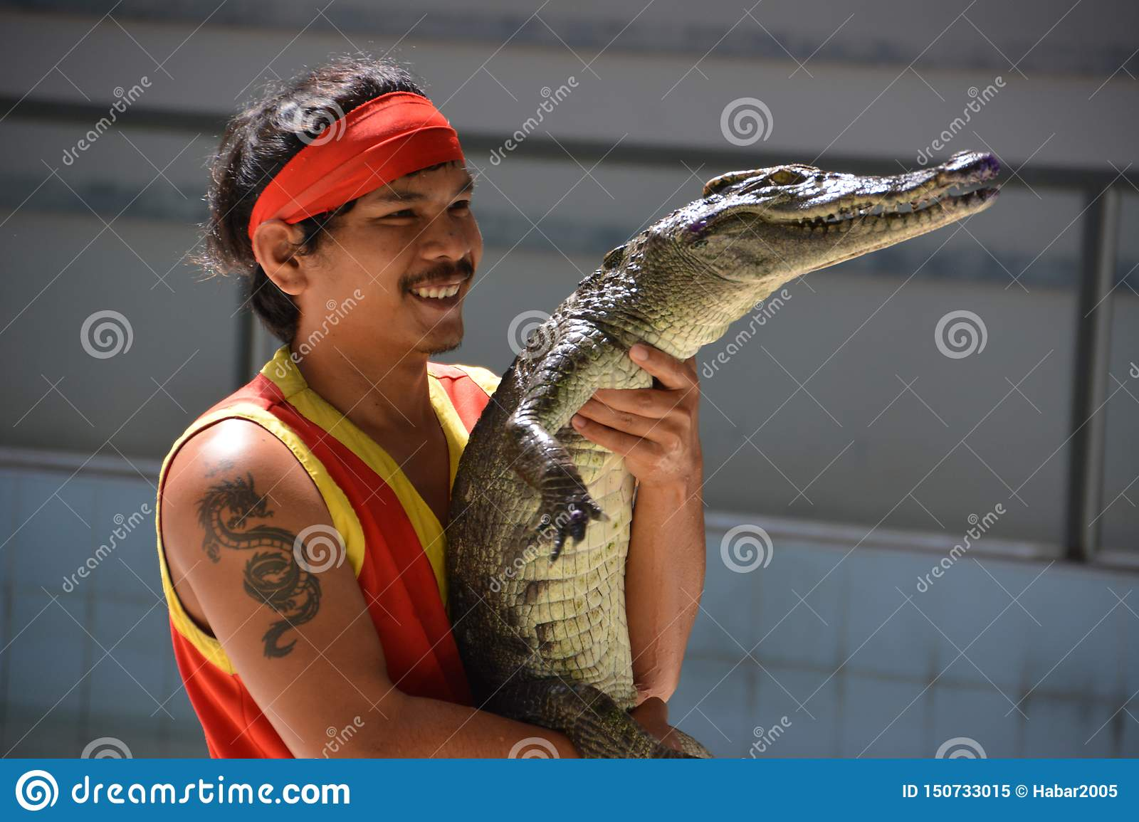 A man is holding a crocodile in his hands. Crocodile show at Phuket zoo, Thailand - December 2015: crocodile show.