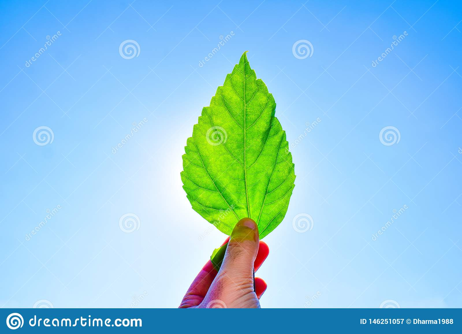 Man holding green leaf against to sun and blue sky