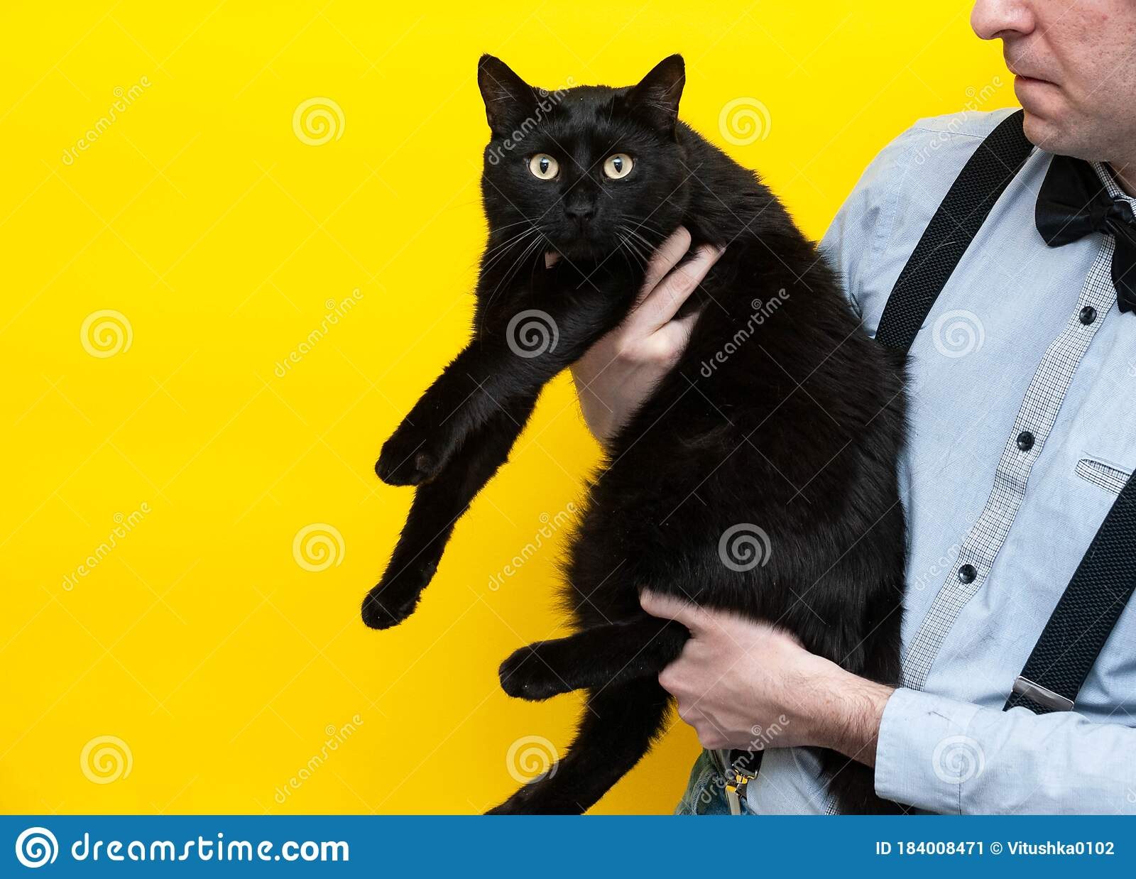 Man Holding Scared Big Fat Black Cat On Yellow Background Stock Image Image Of Emotion Paws 184008471