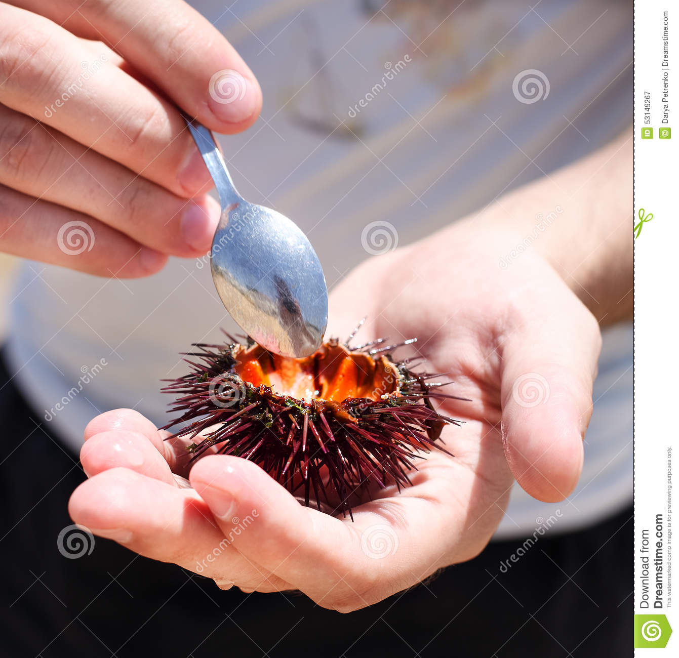 Man Holding A Sea Urchin For Eating It On The Beach Stock Photo ...