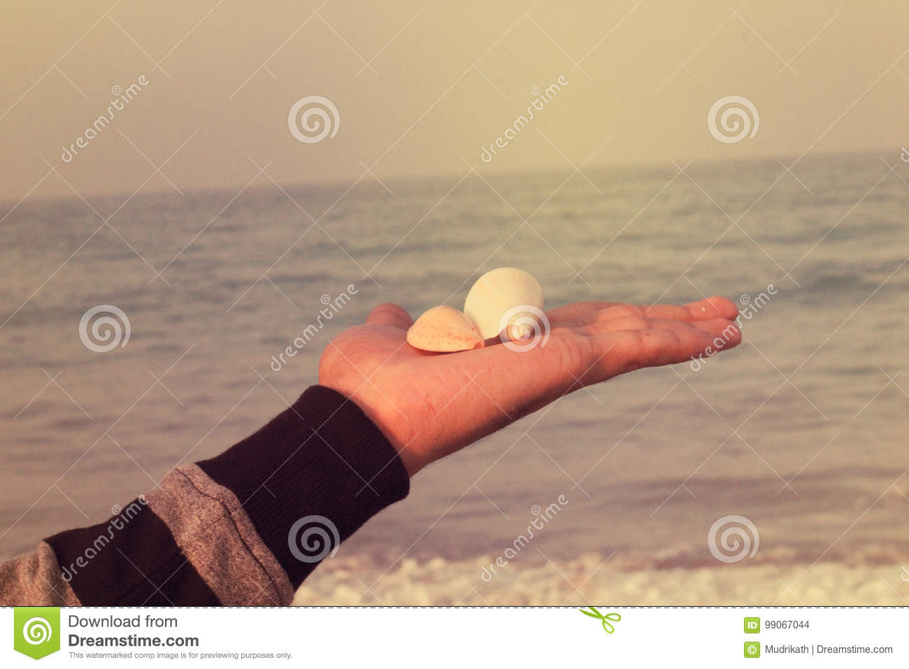 Man holding SeaShells in hand, beach background.