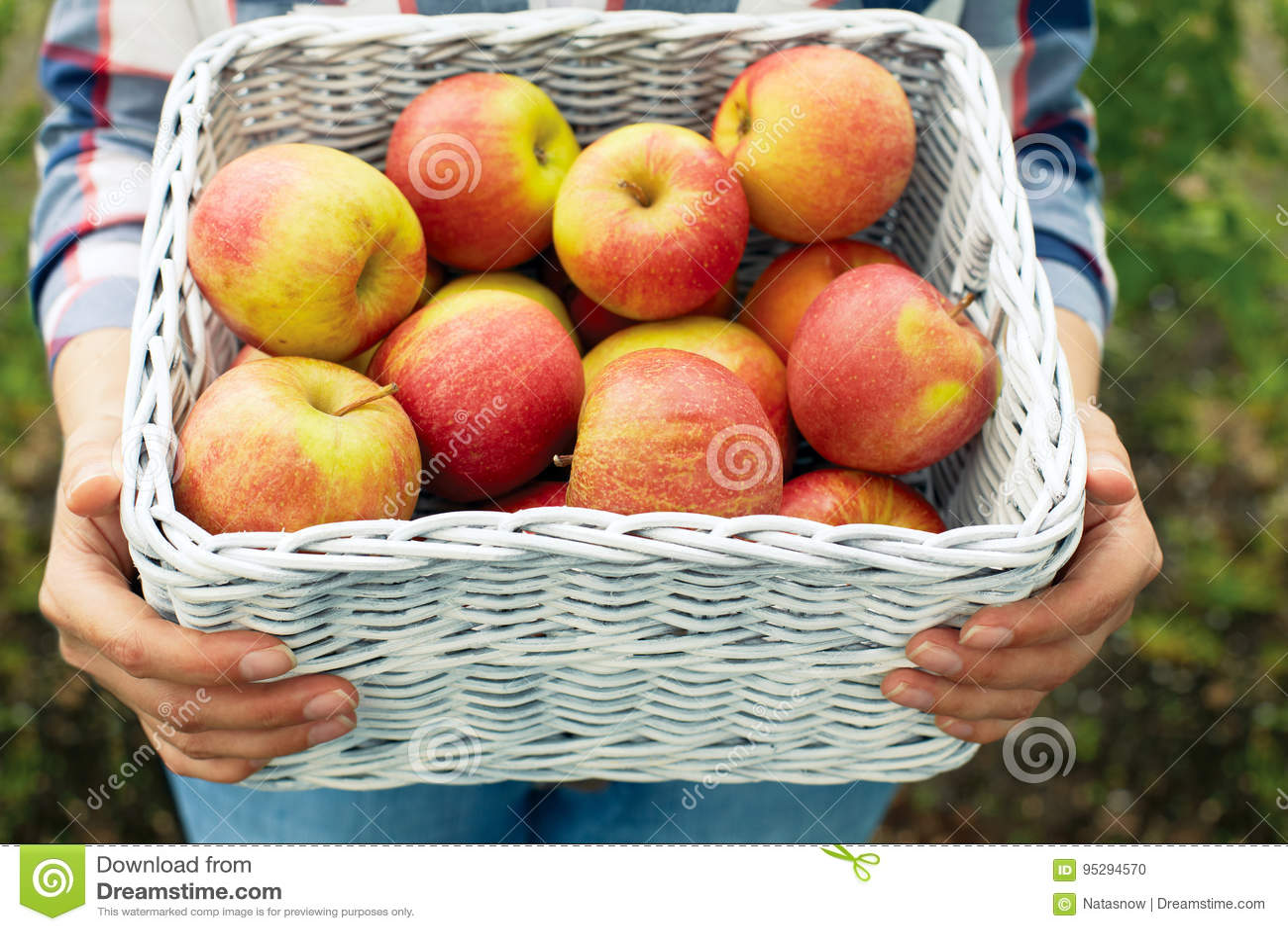 Man holding a wicker basket of ripe apples