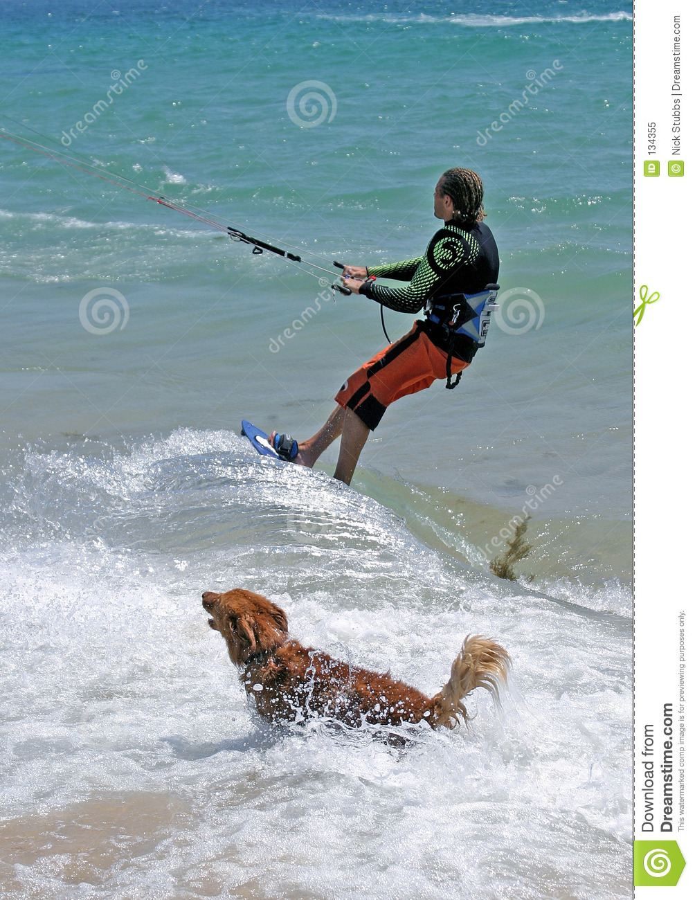 dogs chasing through the - photo #15