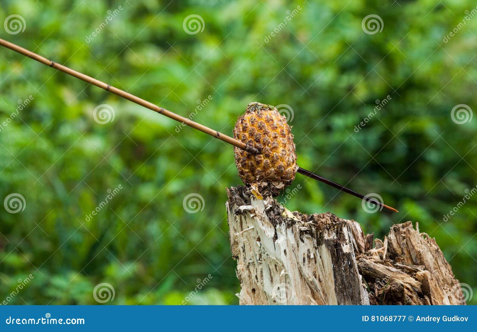 Man Korowai Tribe Shoots A Bow. Tribe Of Korowai Kombai ...