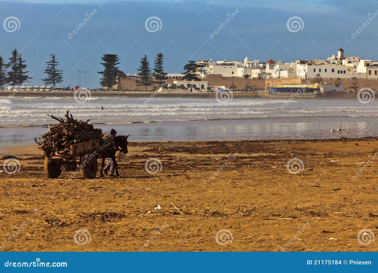 Man leading donkey cart across beach