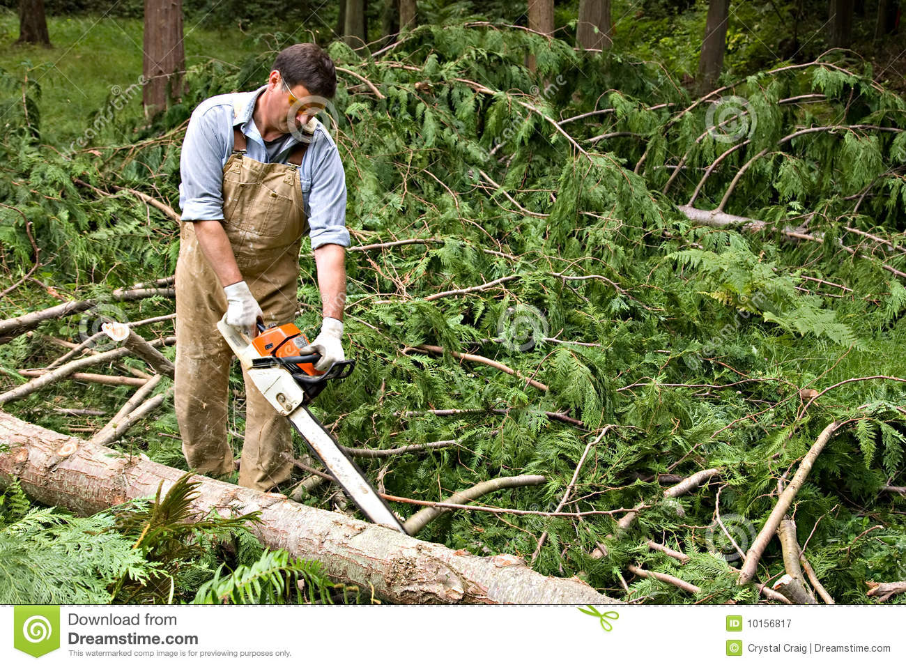 Man limbing downed trees
