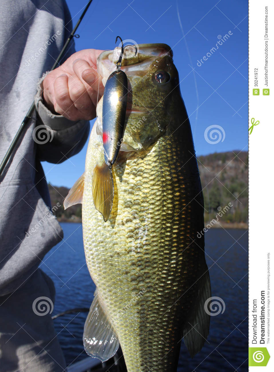 Man fishing holding largemouth bass stock photo image for Best time for bass fishing