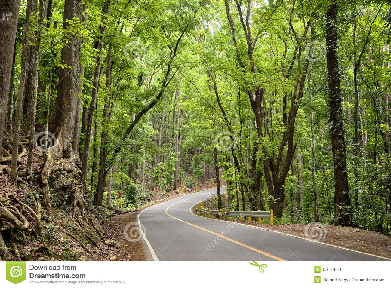 ManMade Forest`, Bohol  Philippines Stock Photo  Image: 55164310