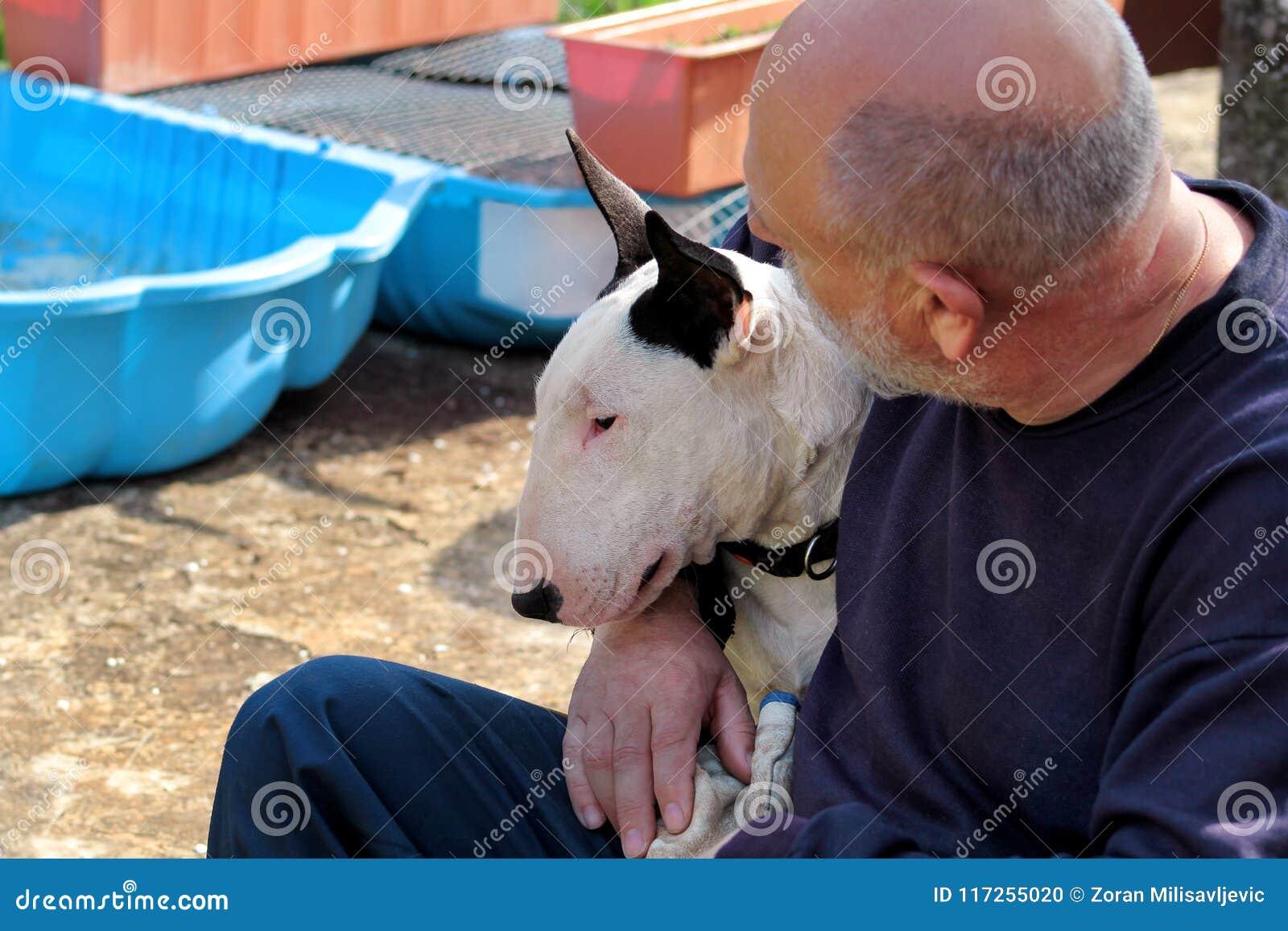 Man med hunden EngelskaBull terrier vit hund i företag med hans ägaresammanträde och tycka om i den trädgårds- utomhus- och dalta