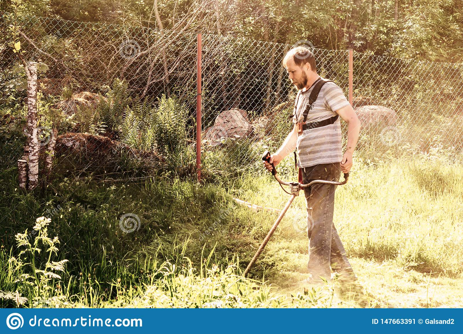 A man mows the grass in his garden with a trimmer