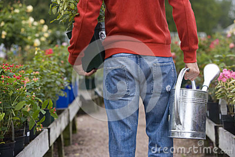 Man in nursery with watering can and plant, rear view