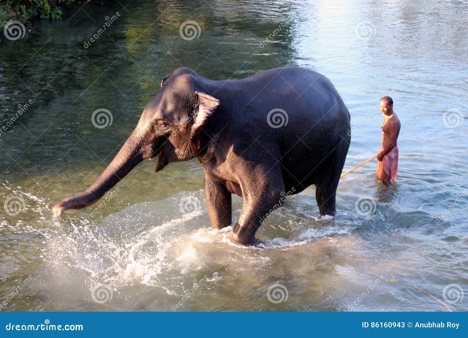 Man och djur förlaga tjänare Elefant med mannen