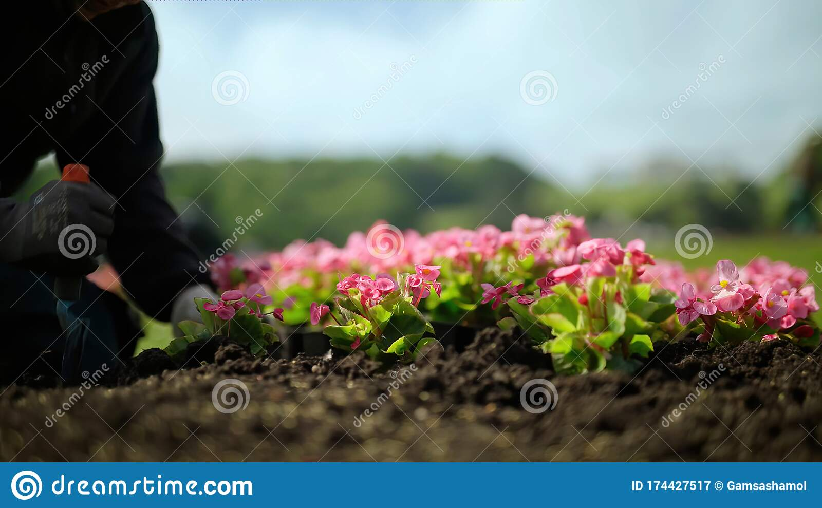A Man Planting Flowers In A Flower Bed Stock Image Image Of Calm