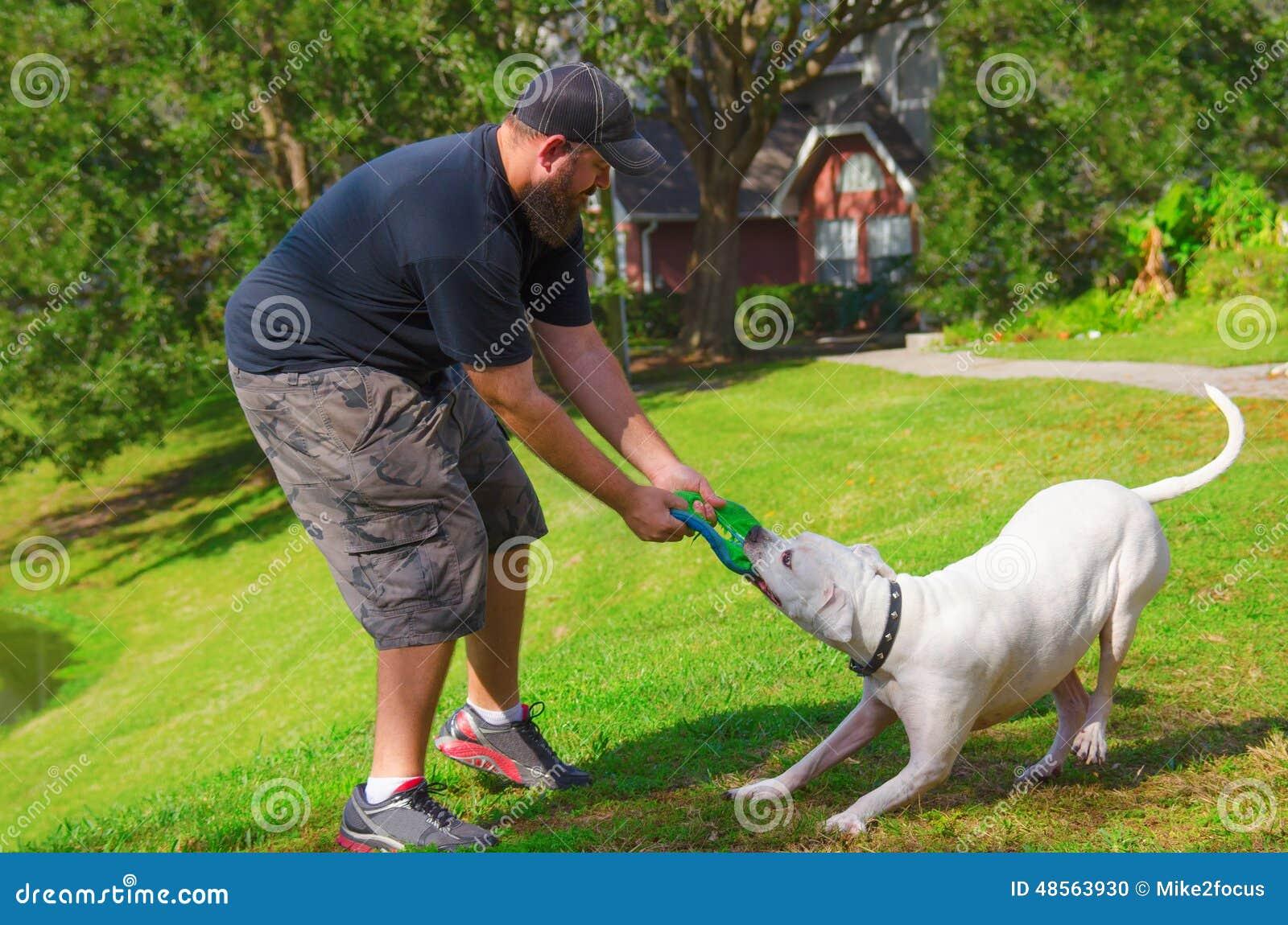 Man Playing Tug Of War W American Bulldog Dog Pet Stock