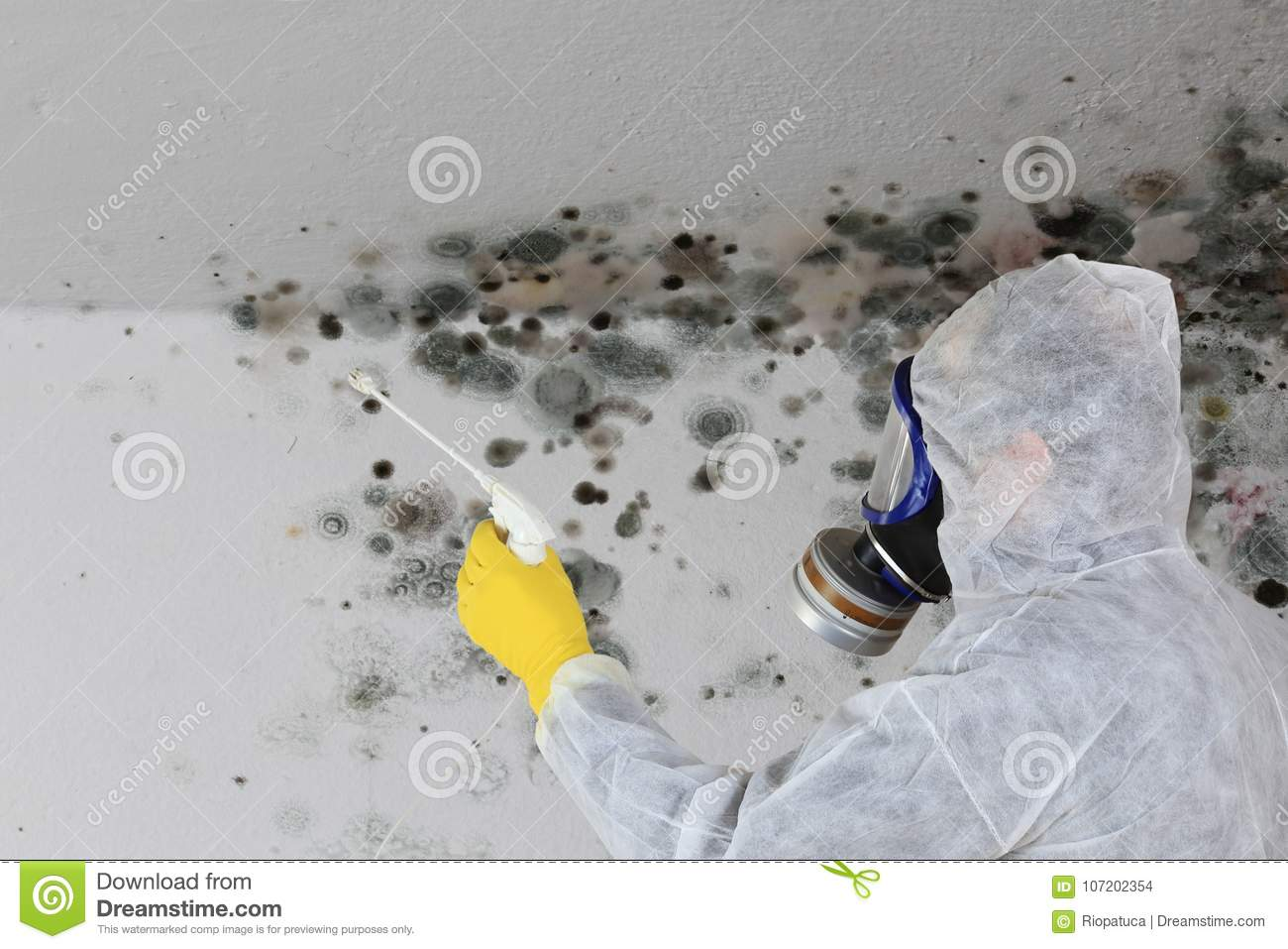 Man removing Mold fungus with respirator mask