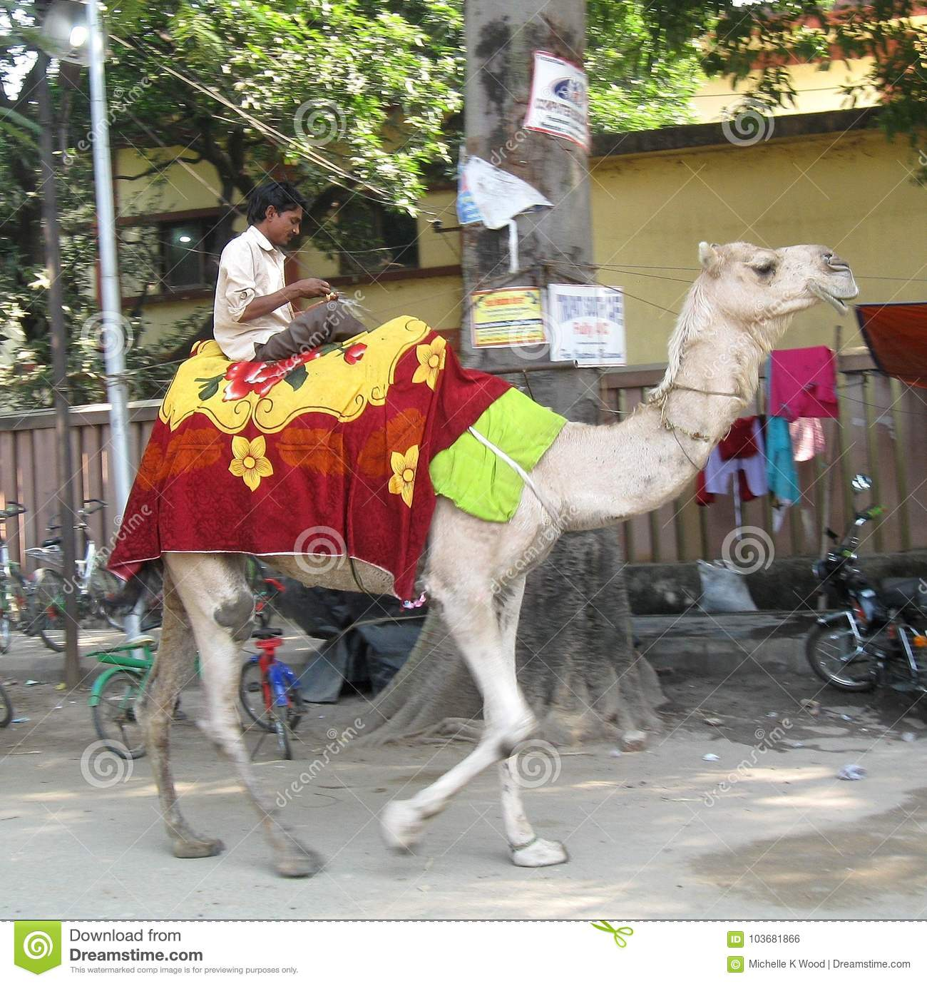 Man riding camel outside the Karma Tharjay Chokhorling Buddhist Temple Bodhgaya India