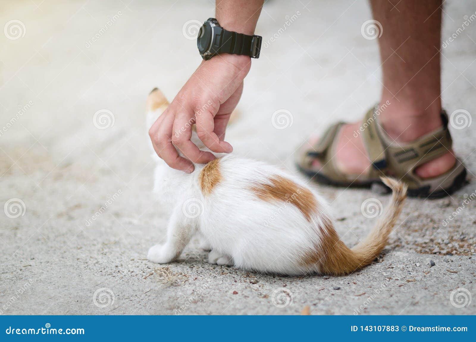 Man`s hand patting a homeless kitten