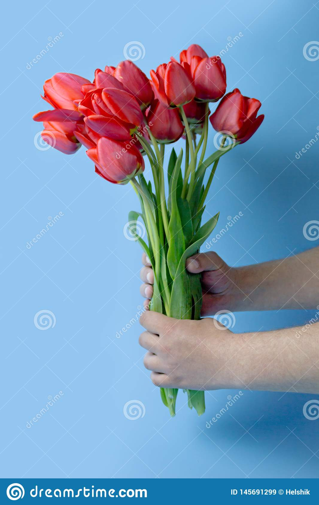 Man`s hand reaching out a bunch of yellow tulips on blue background with copy space
