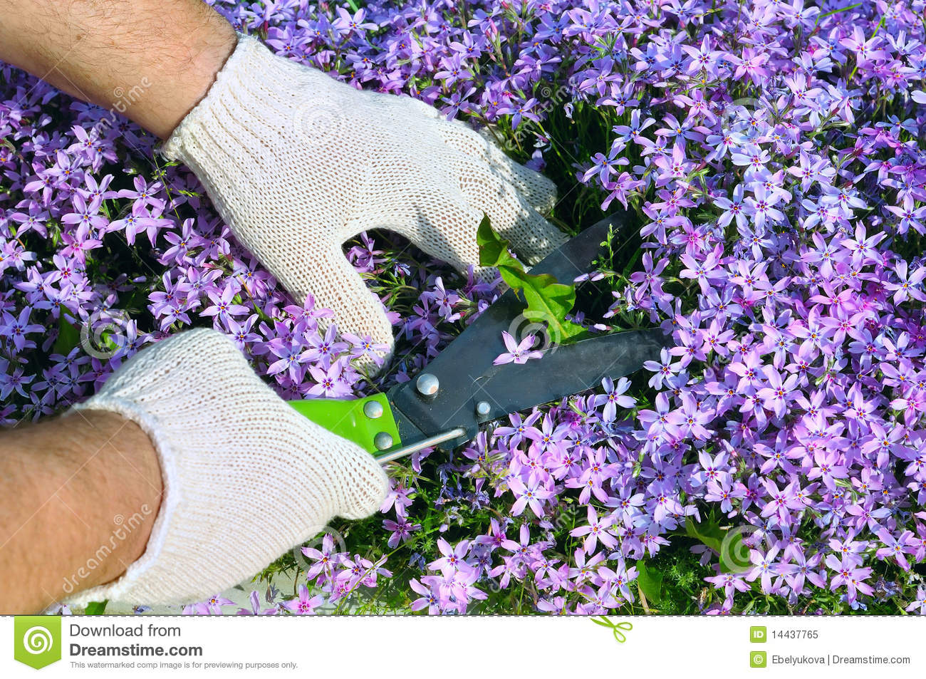 Mans Hands Cutting Weeds In Flowers Stock Image Image Of Small