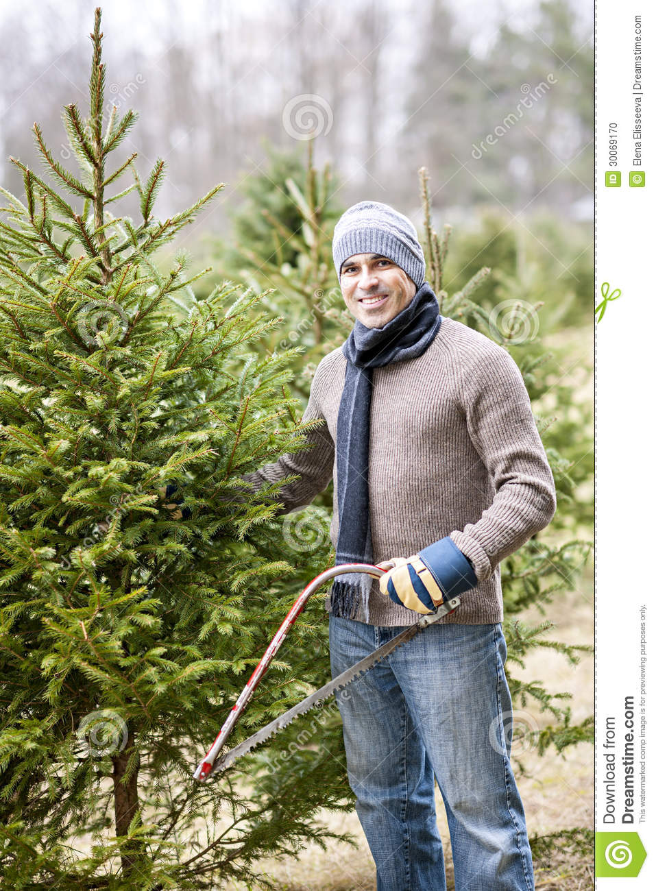 cut your own christmas tree in los angeles