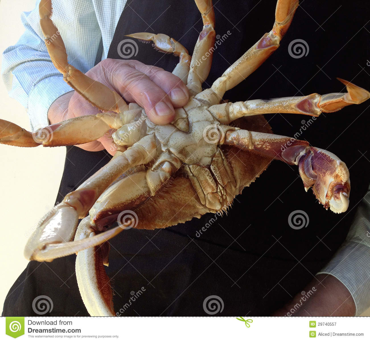 Man Holds Crab Upside ...