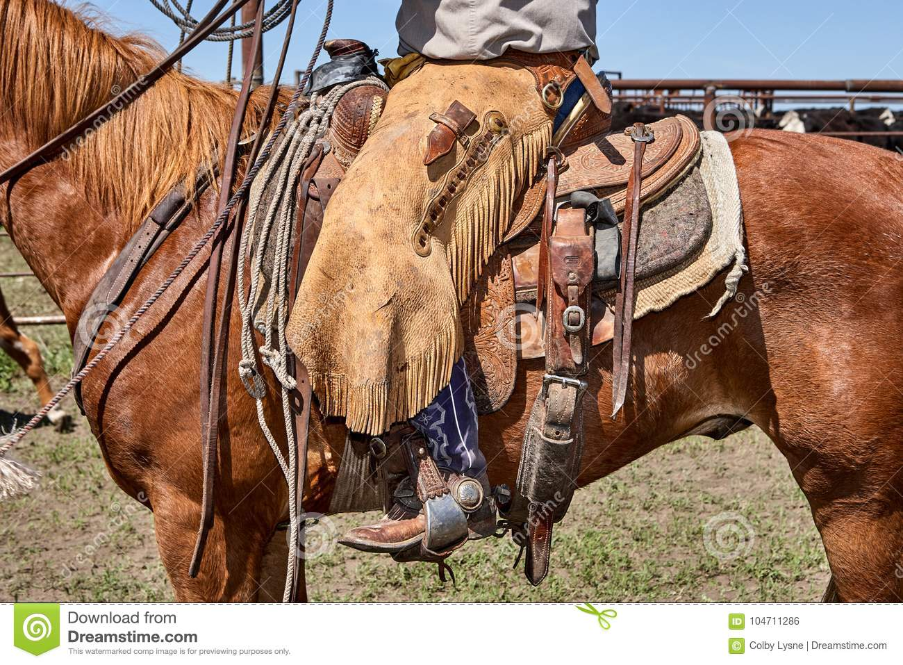 Man Sitting On Saddle Attached To Brown Horse Stock Photo