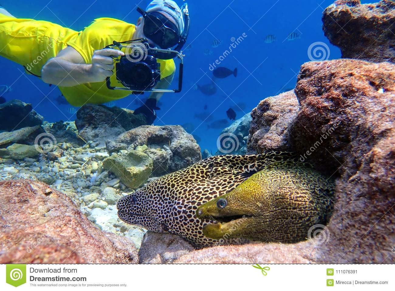 Man snorkels and photographs moray eel in the tropical water of Maldives