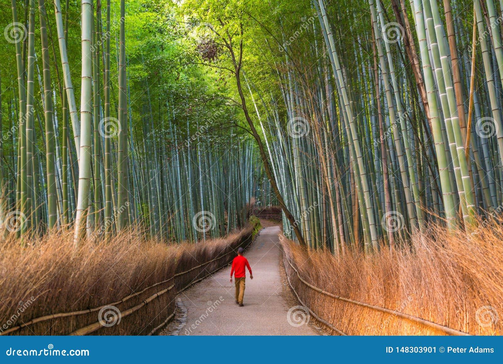 Man som går till och med bambuskog på Sagano, Arashiyama, Kyoto