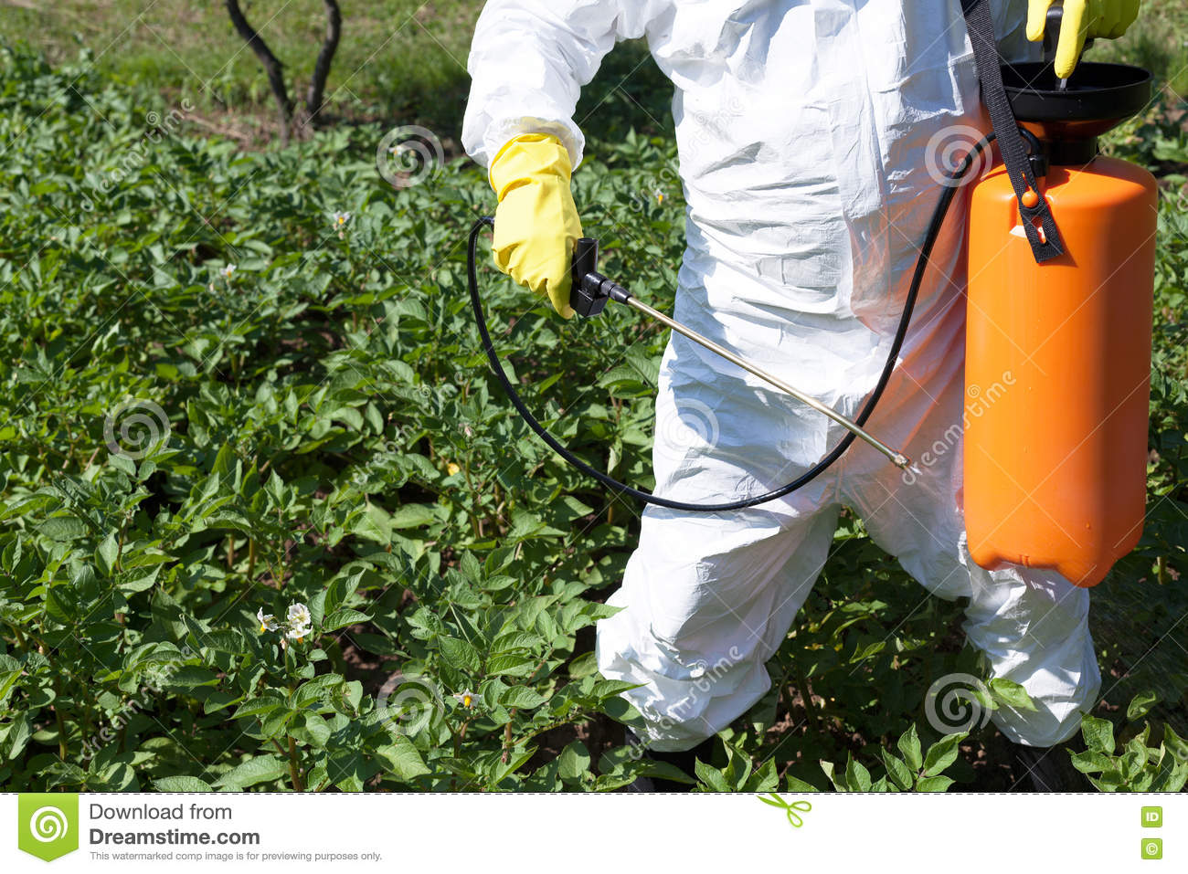 Man spraying toxic pesticides or insecticides in vegetable Organic pesticide for vegetable garden
