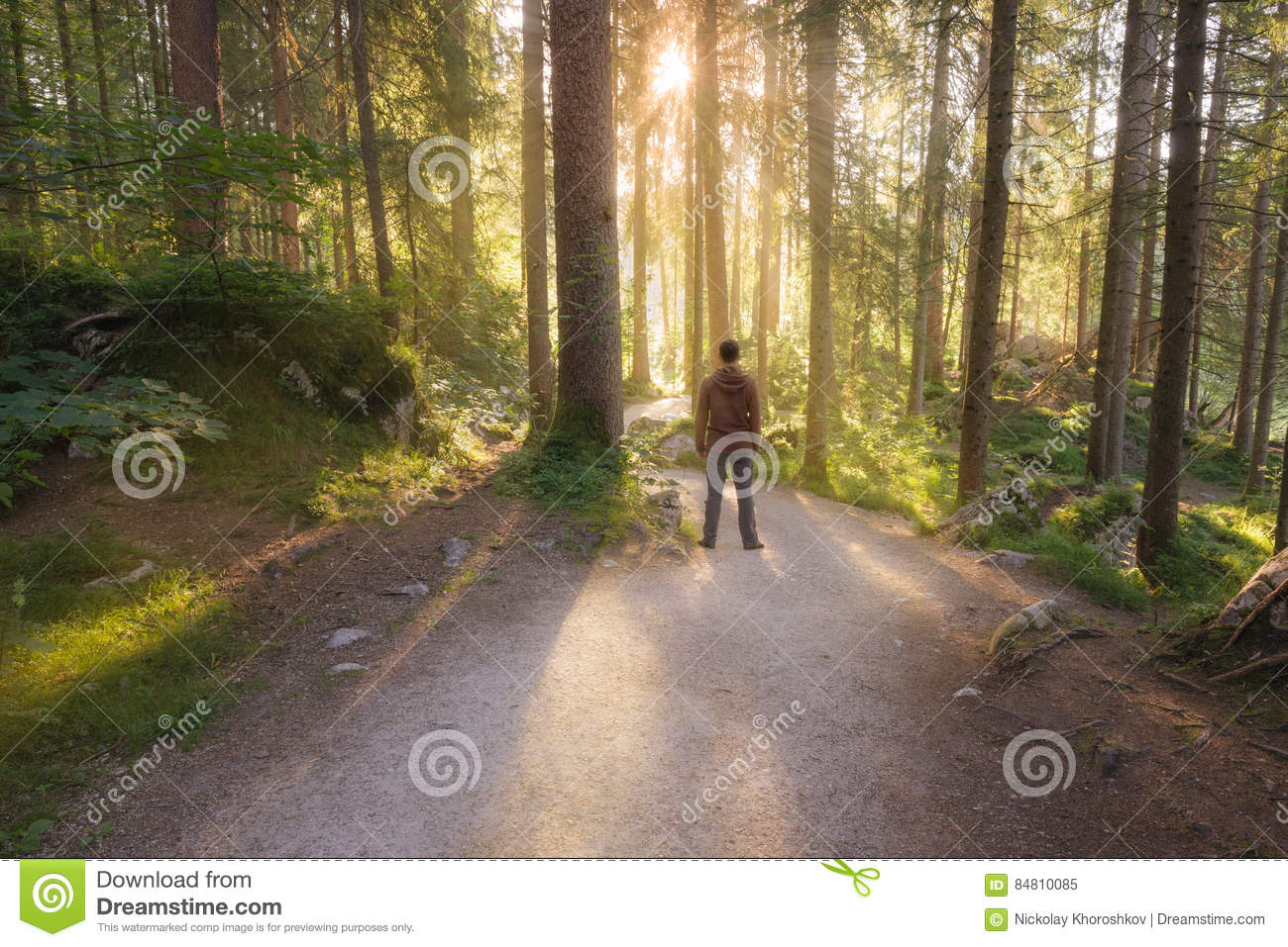 Download Man Standing At The Forest Path Stock Image - Image of landscape, outdoor: 84810085