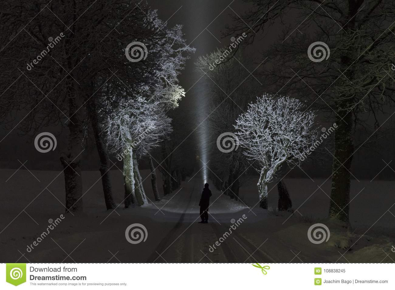 Man standing outdoors at night in tree alley shining with flashlight