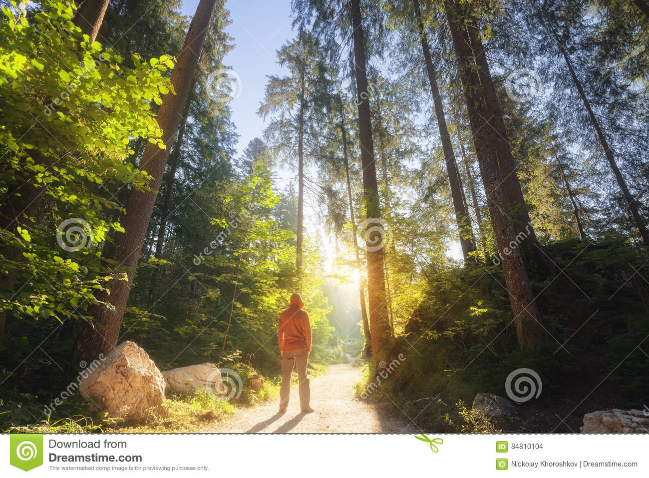 Download Man Standing At The Sunny Forest Stock Photo - Image of green, traveler: 84810104