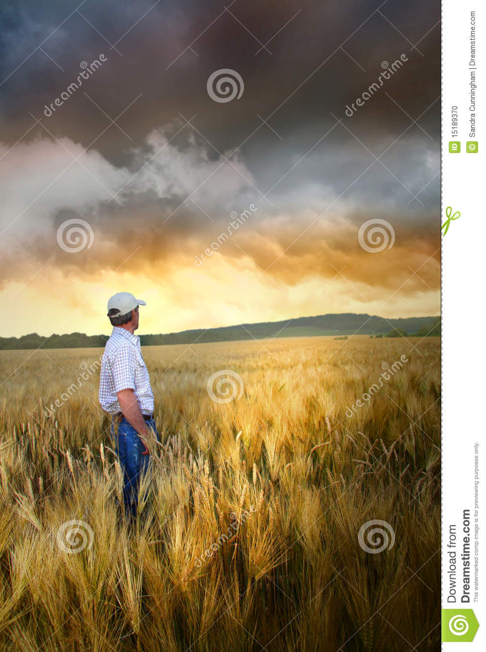 Wheatfield in single gay men
