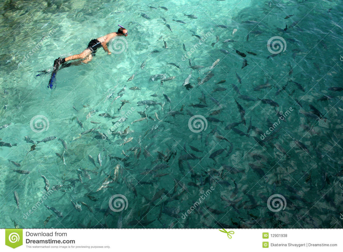 man swimming with fish stock photo image of resort mask