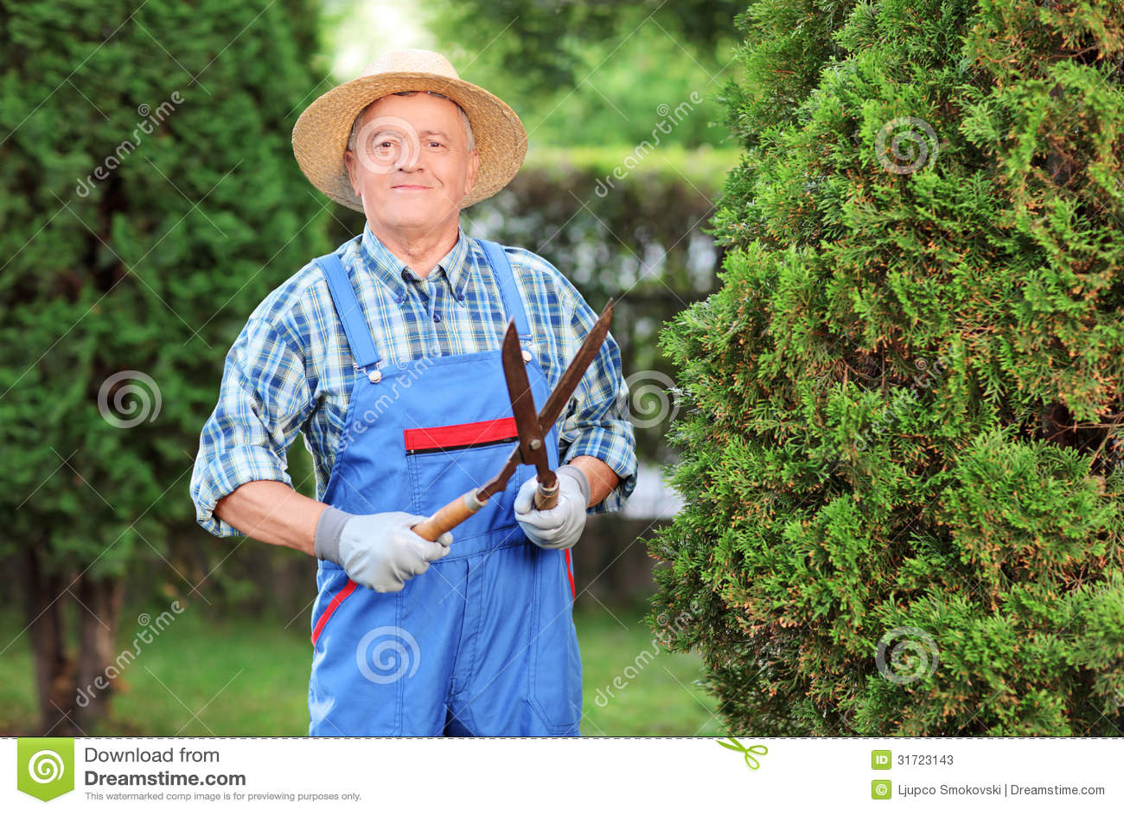 man trimming a fence in a garden stock photos image clip art clothes haper clip art clothes haper